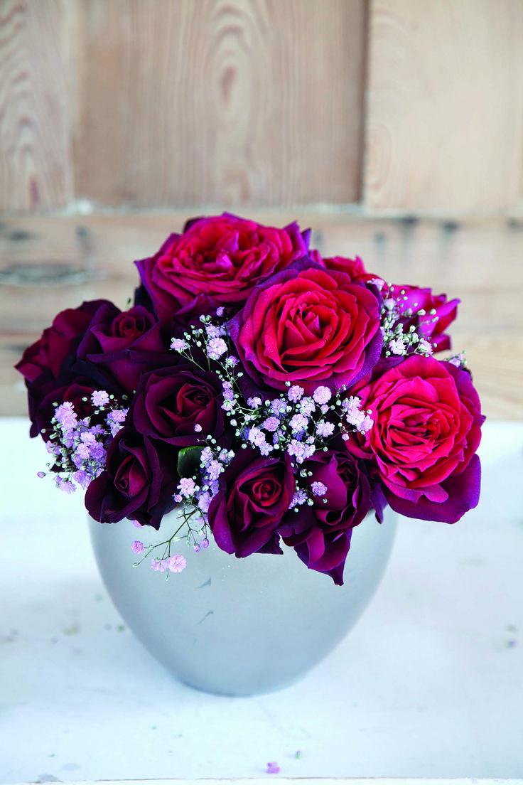 gr fin diana parfuma kollektion adr rosen sch nheiten mit auszeichnung adr roses. Black Bedroom Furniture Sets. Home Design Ideas