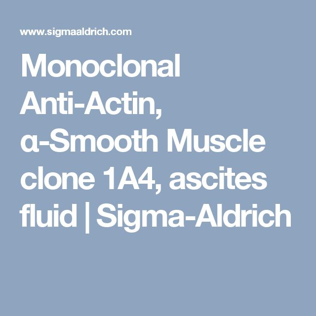 Monoclonal Anti-Actin, α-Smooth Muscle clone 1A4, ascites fluid | Sigma-Aldrich