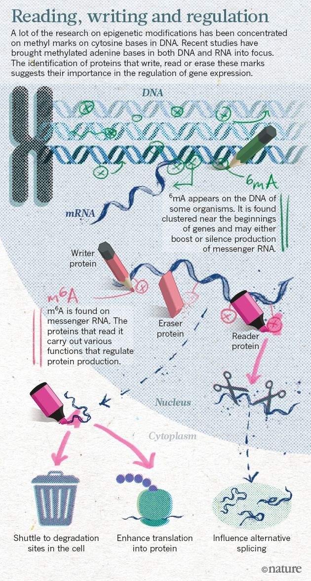 An epigenetics gold rush: new controls for gene expression  How rediscovered chemical tags on DNA and RNA are shaking up the field.