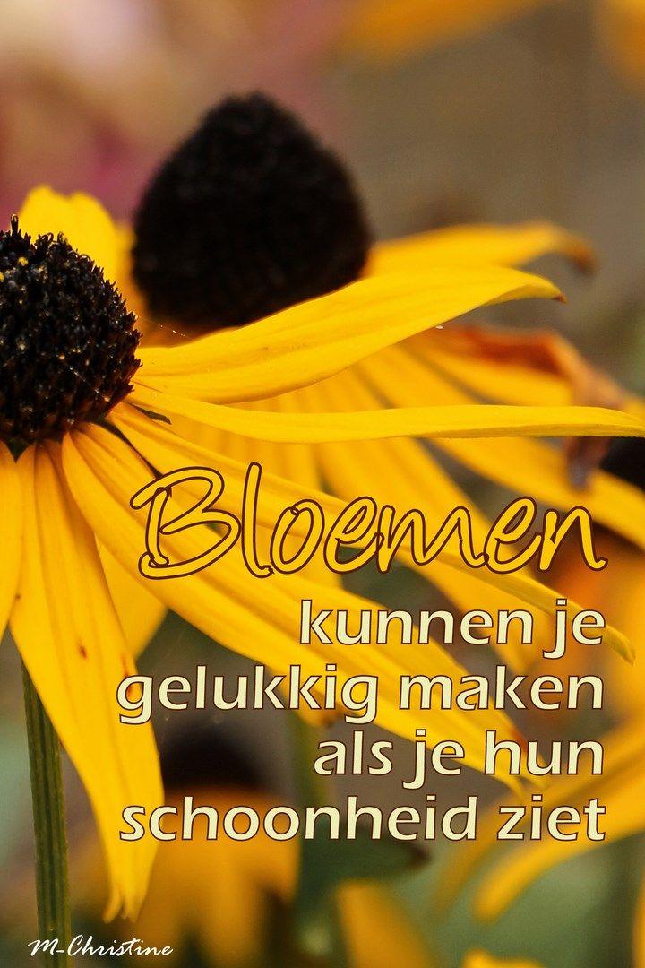 Citaten Over Bloemen : Beste afbeeldingen over zeg het met bloemen op