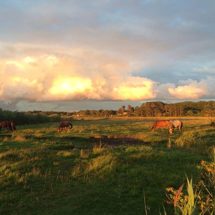 Solnedgang ved Flyndersø, Rørvig