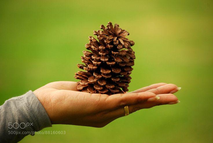 Gift of Nature by edathiljme-001