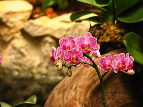gratis prr orchide thaimassage