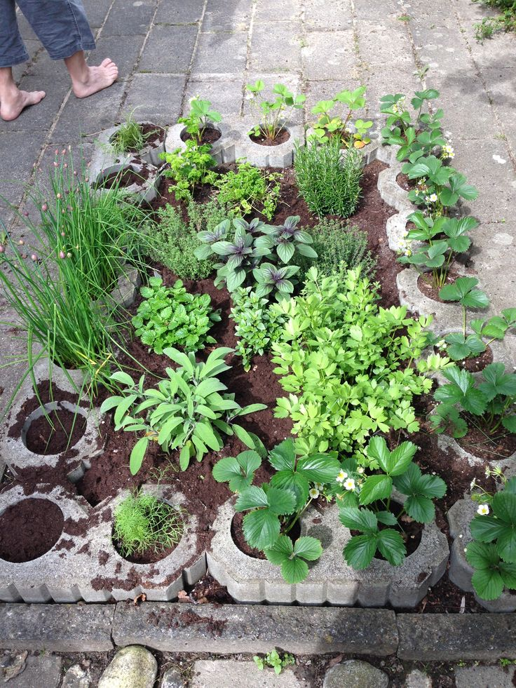 Spice garden early Spring