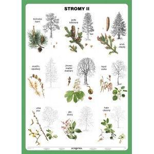 Stromy II.