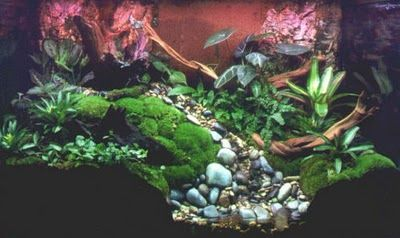 Vivariums For Amphibians Can Have Plants And Waterfalls