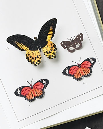 Butterfly templates martha stewart for Martha stewart butterfly template