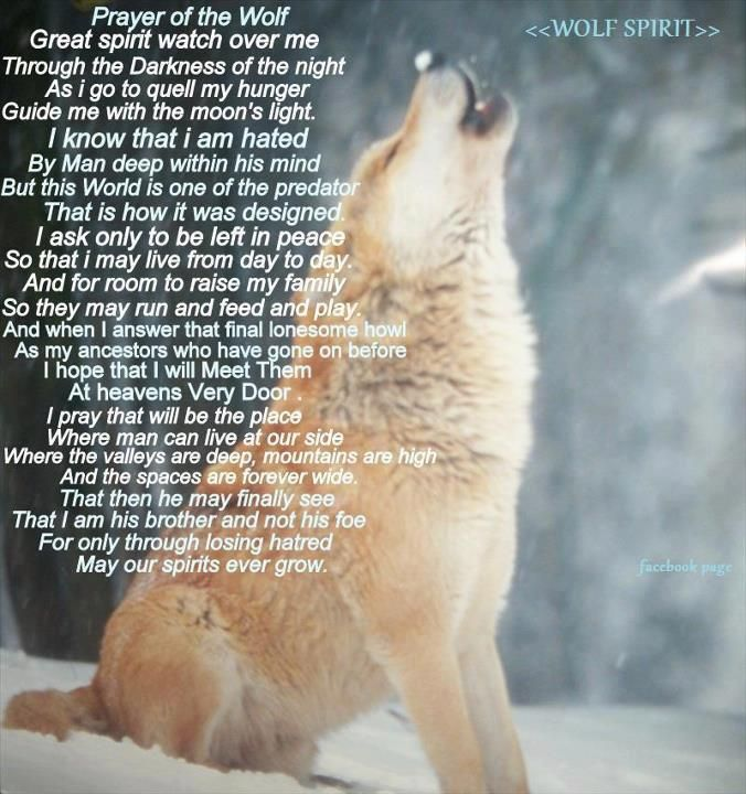 Most Beautiful Words For The Wolf Wolves Pinterest