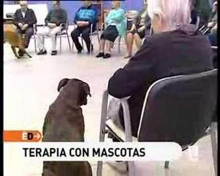 """""""Mascotas buenas para la salud"""". En: España directo, Televisión Española, 2008 Mayo"""