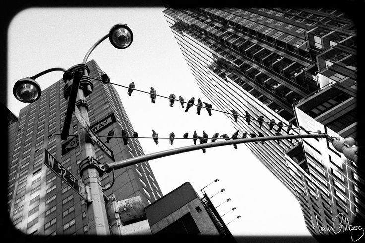 Bird Watchers by Marius Gilberg on 500px