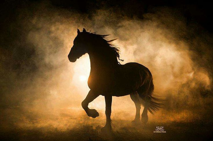 the horse trotted out of the glowing mist...