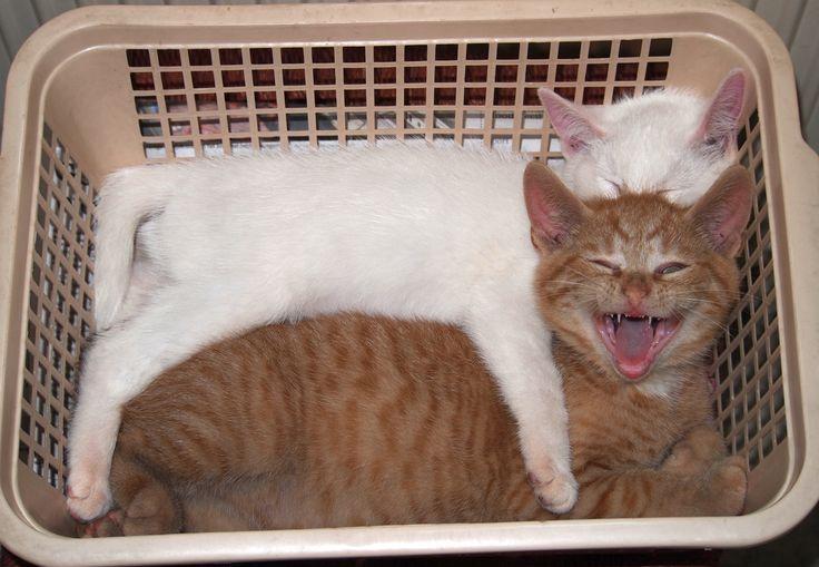 Monsterke, de lachende Kat.