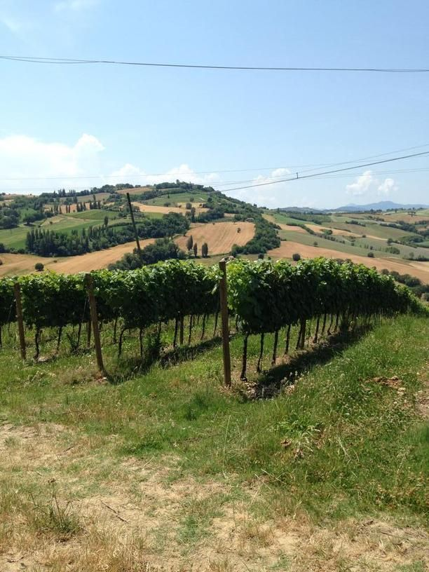 Telling Le Marche | Pottery and Wine