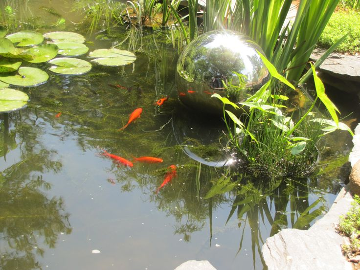 71 best images about ponds on pinterest gardens long for Goldfish pond plants