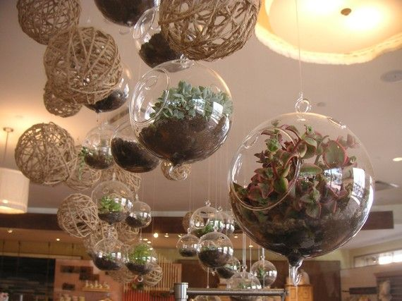 DIY, 6 Succulents And 2 Glass Globes For Terrarium Projects, Create A Fun Gift. $42.00, via Etsy.