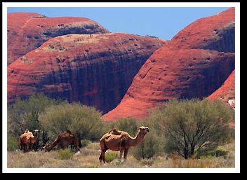 Australia Outback tours - Red rock