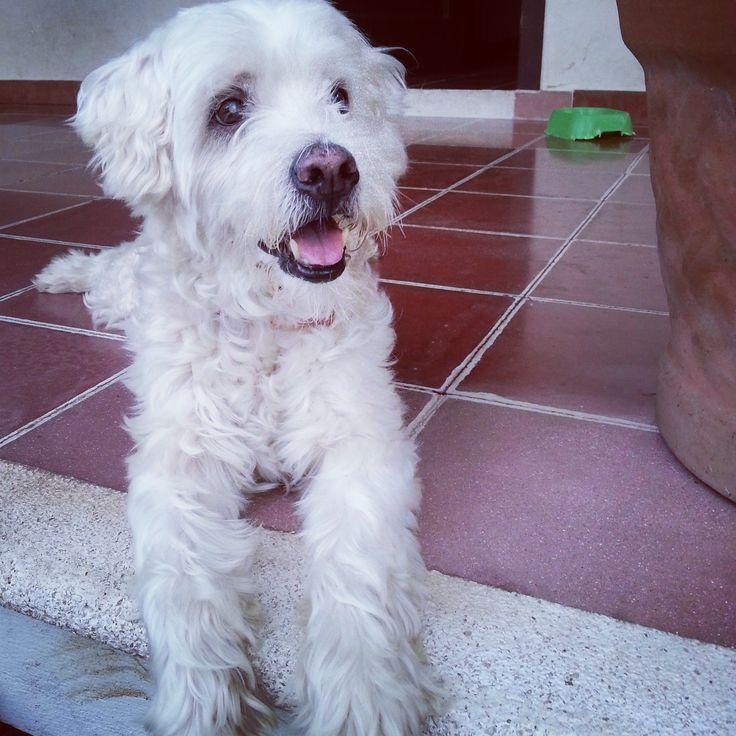 Happy doggie!