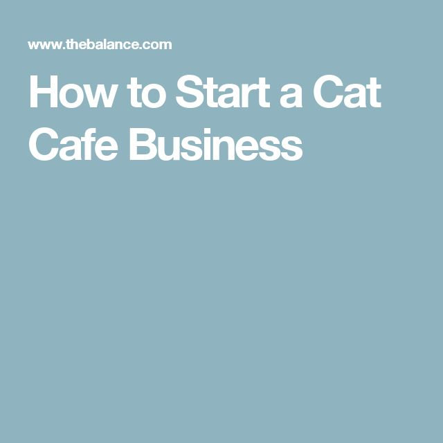 How to Start a Cat Cafe Business
