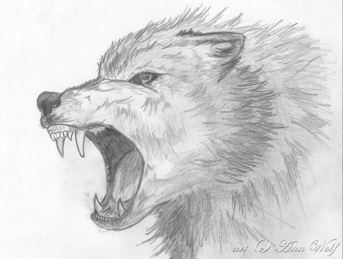 angry animal drawing - photo #1