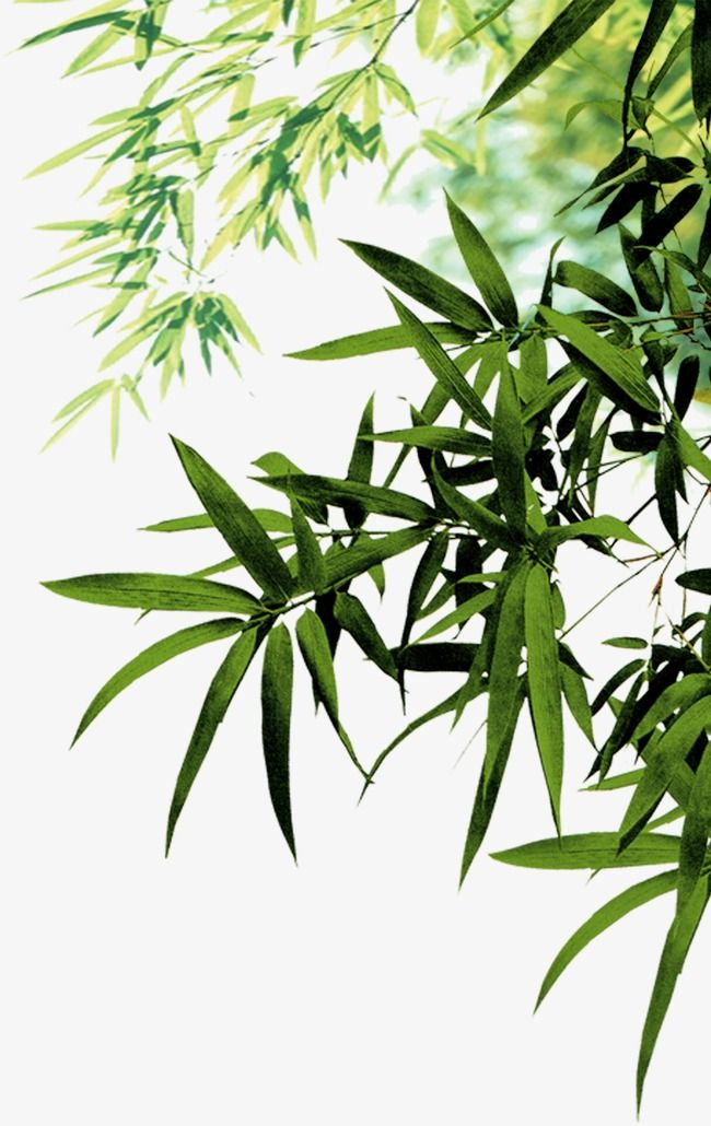 Bamboo Leaves Green Leaf Png Transparent Clipart Image And Psd