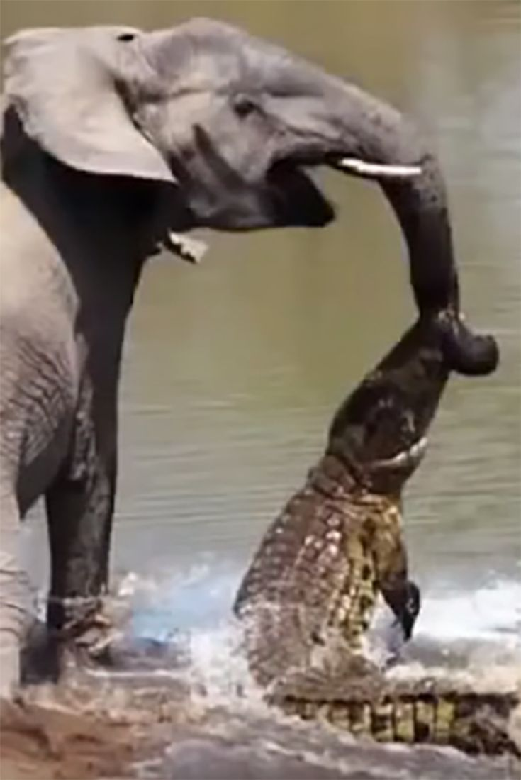 10 Unbelievable Animals That Saved Other Animals With Images