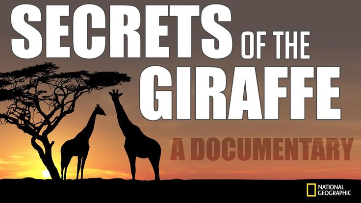 Secrets of the Giraffe: A National Geographic Documentary