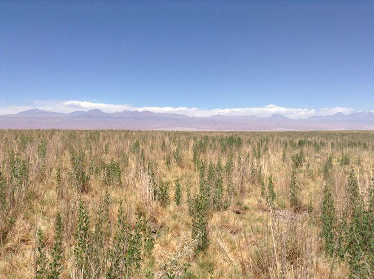 Salar de Atacama, vista circundante a lagunas Cejar y Tebinquinche, Región de Antofagasta, Chile