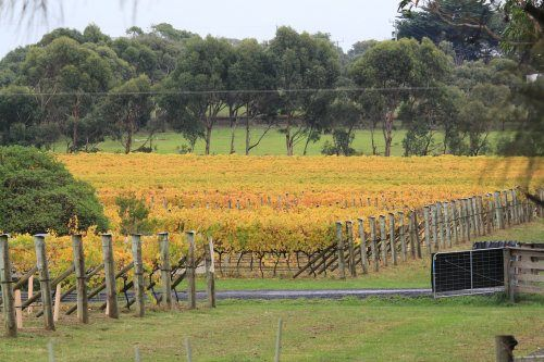 phillipIsland's Purple Hen Winery in autumn