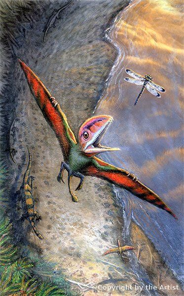 Great Dinosaur Pictures - Tom Miller - Peteinosaurus