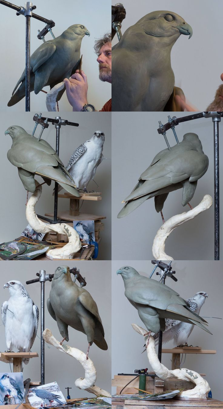 Nic Bibby Sculpture. Gyrfalcon. Back in the studio, and working on my Gyrfalcon again. Had a fantastic holiday [photos of the Faroes and Norway to come] but it's good to be back!
