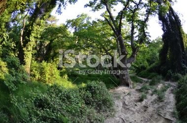 forest ornamental grasses fisheye Royalty Free Stock Photo