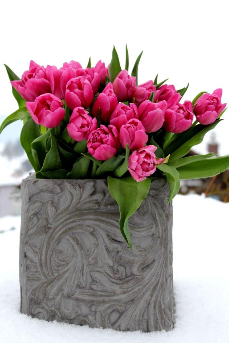 die besten 25+ tulpen pflege ideen auf pinterest, Gartengerate ideen