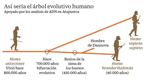 El ADN cierra interrogantes sobre el origen del hombre de Atapuerca