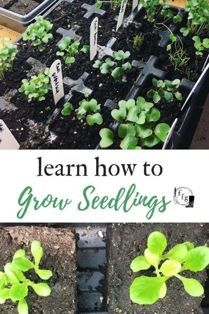 Seed Starting 101 How To Plant Seeds At Home Organic Vegetable