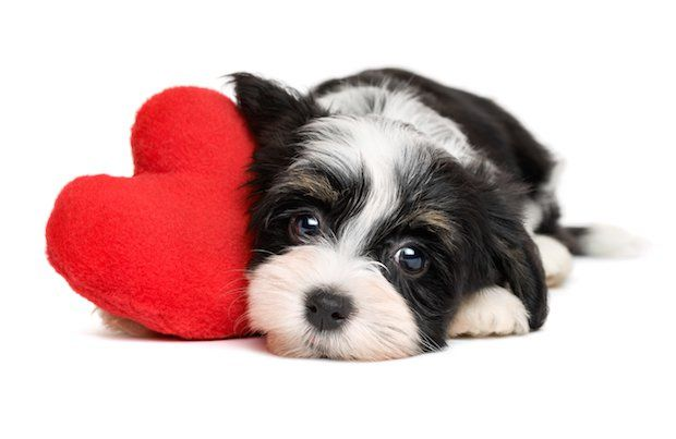 How to Keep Your Pets Safe During Valentine's Day | Pet360 - Pet360 Pet Parenting Simplified
