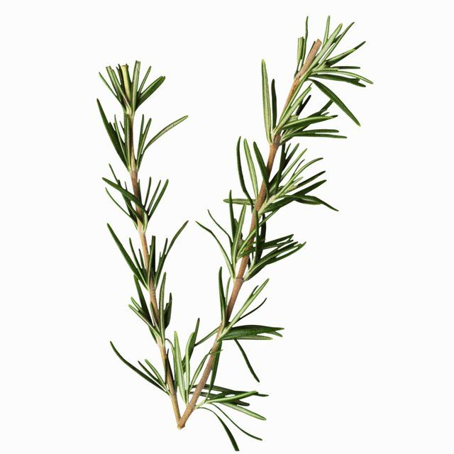How To Make Essential Oils From Rosemary Leaves Rosemary Tea Hair Tonic Rosemary Leaves