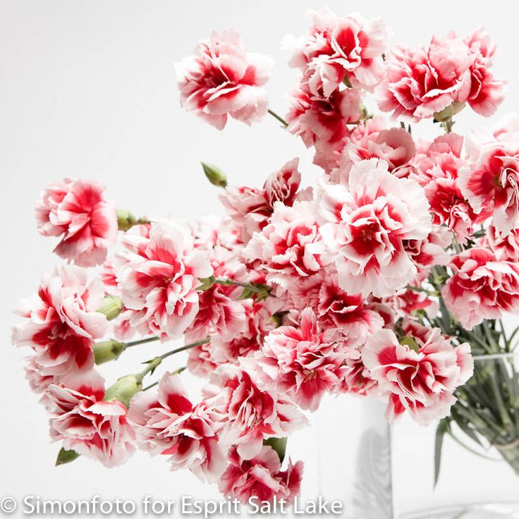 Red Container Flowers