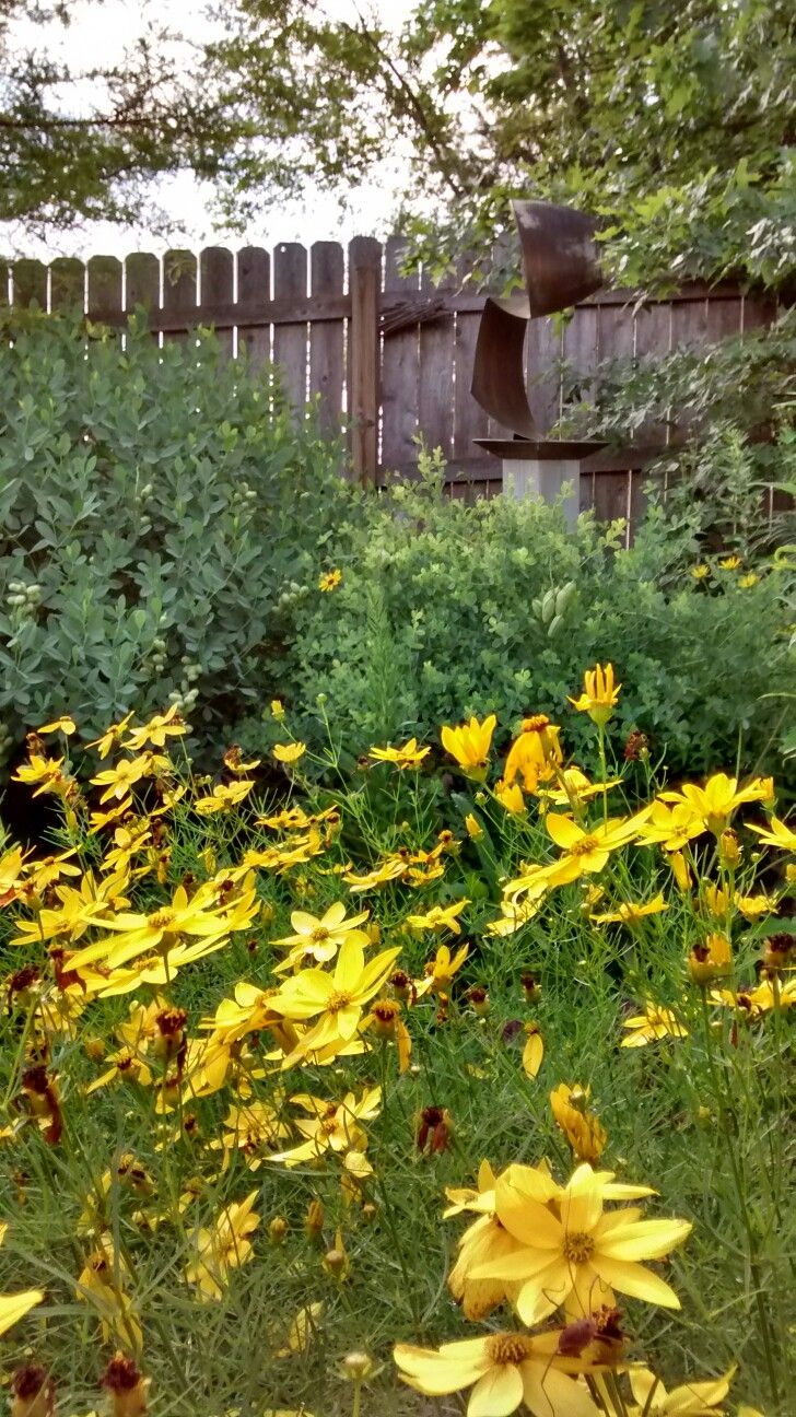 105 best images about native plants  trees  shrubs