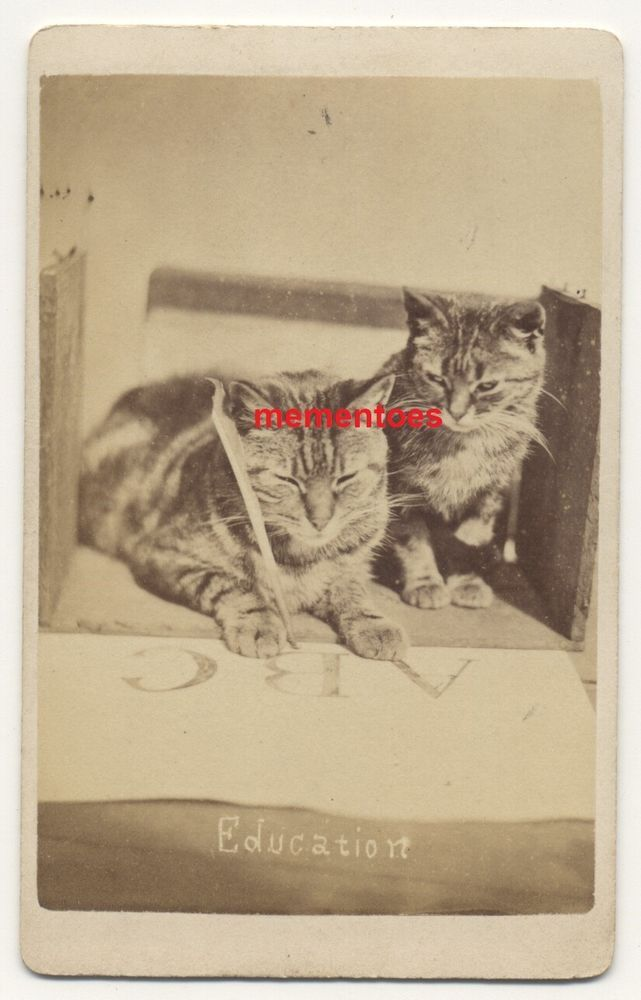 Famous CDV Cat Writing Harry Pointer Brighton Education c1870's