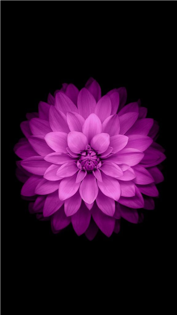 20 Iphone 6 Flower Wallpapers Free To Download Iphone Pinterest