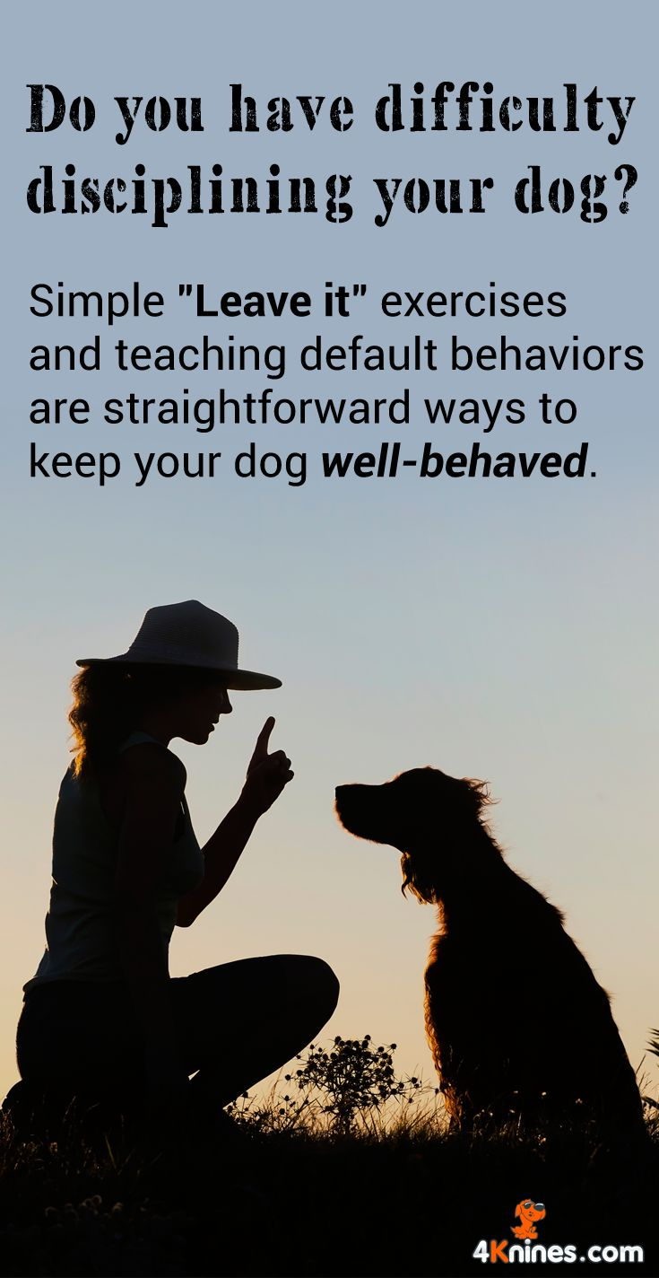 Dog Impulse Control Training provides simple steps to take for your dog to act more calmly like waiting before your dog sits before you give them something to eat.