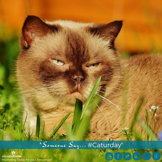 Good Saturday Morning Friends and Fans! Another rainy day  here in Northern Virginia  Yay Not! And did someone say Caturday? Make it a great day! Meow!  by elevateitnow