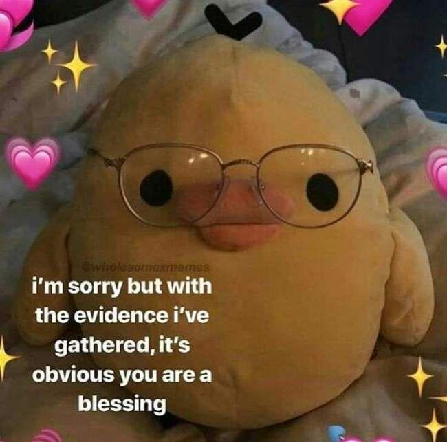 Flirty memes cute 175 Cute