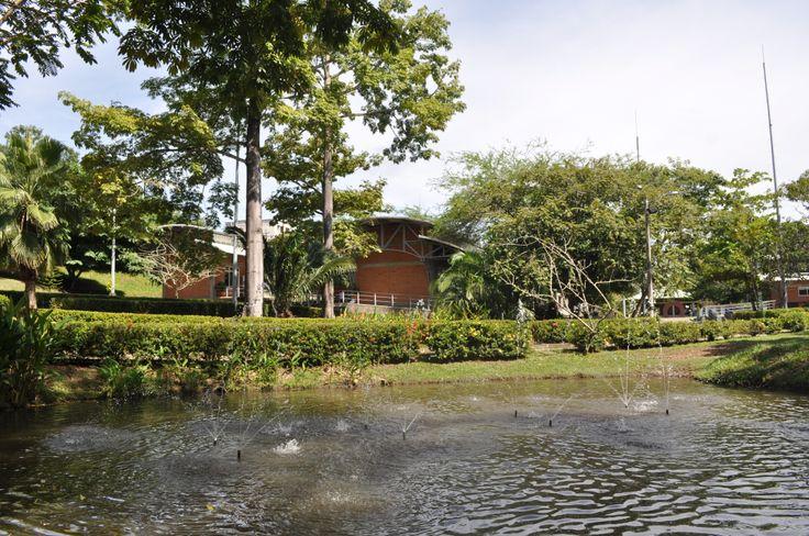 Seccional Bajo Cauca:  Quizás es el campus más ecológico, de todas las seccionales y sedes. Aunado, según mi experiencia con un deseo de aprendizaje de los-as estudiantes. Este ambiente, da un sentido de pertenencia y gusto a cada una de las personas que comparten este espacio.
