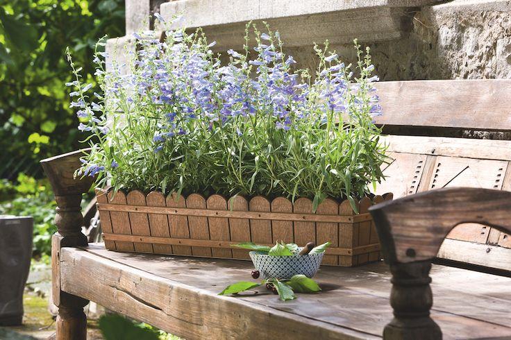 Für mehr Romantik im Garten: Country. #emsagmbh #emsa #blumenkasten #country #traditionell #romantisch #gemütlich #holzbank