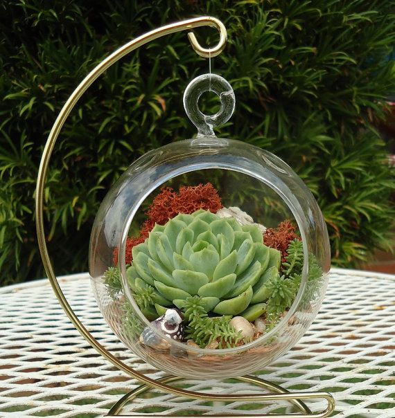 SALE Budget-Priced California Quail Colorful Succulent Terrarium Garden Hanging DIY Kit with Gift Box and FREE Stand