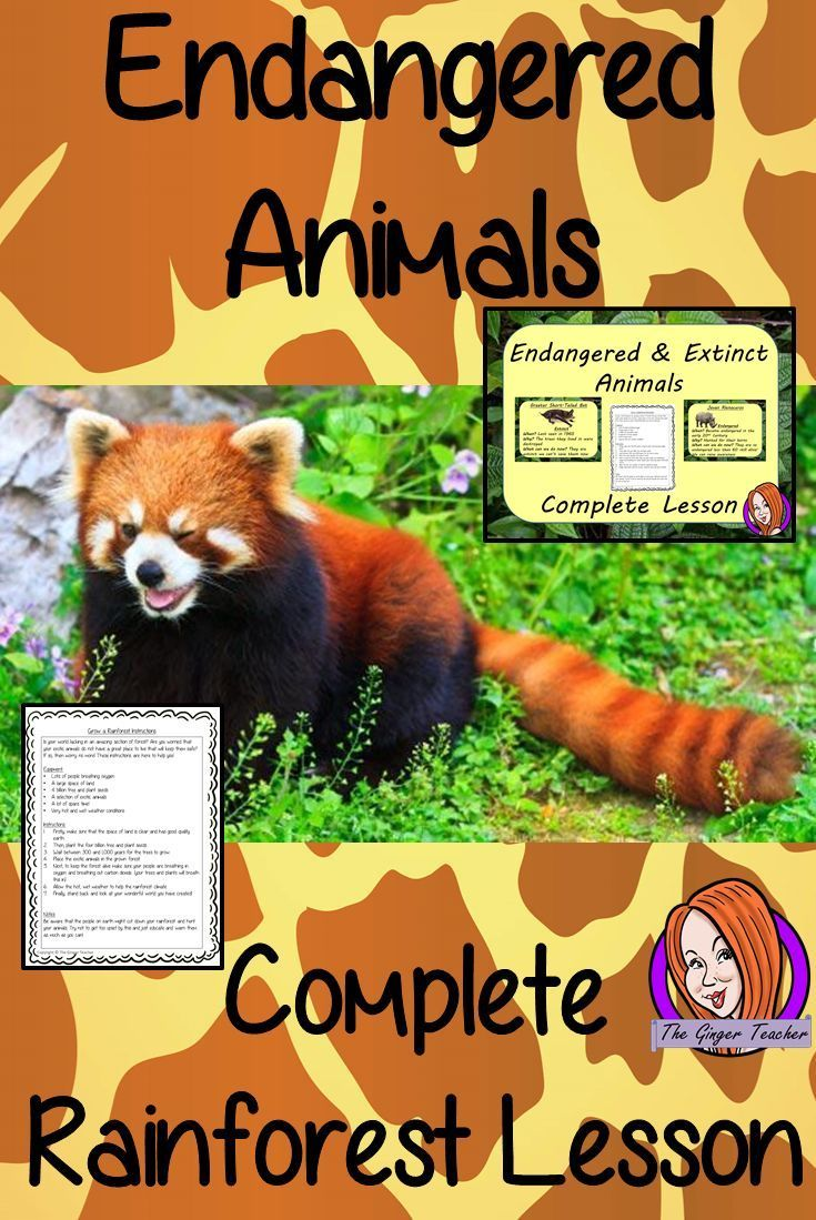 endangered and extinct animals essay What is the difference between endangered, threatened, and extinct species how would you balance the concerns of these species while.
