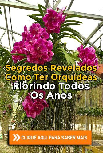 APRENDA : • Quais são os tipos de orquídeas • Materiais necessários para cultivar orquídeas • Onde plantar orquídeas em vasos ou arvore? • Qual substrato usar para plantar orquídeas • Os 4 fatores essenciais de sobrevivência das orquídeas • Como identificar e combater pragas e doenças • Como adubar orquídeas #orchids #orquídea #orquídeas #flores #jardim #jardinagem