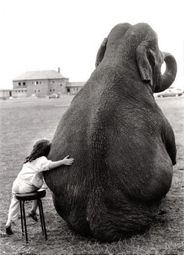 This makes me want an elephant
