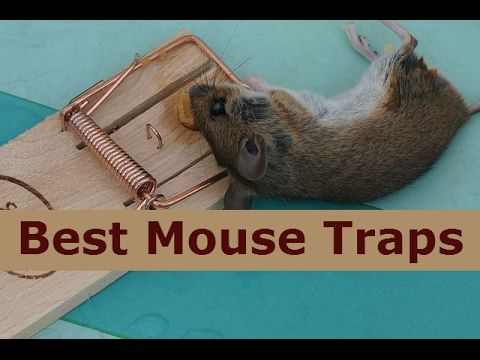 Best Amazing Catch Rats/Mouse Traps - How to Find and Catch Rat in Cambo...